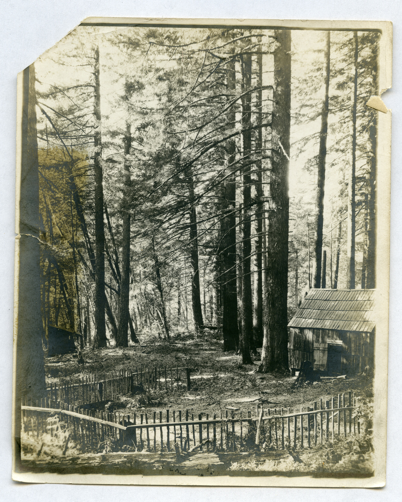 Photograph of a Cabin in the Woods Surrounded by a Fence