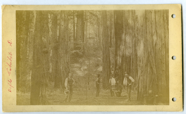 Photograph of Six Men Standing in the Woods