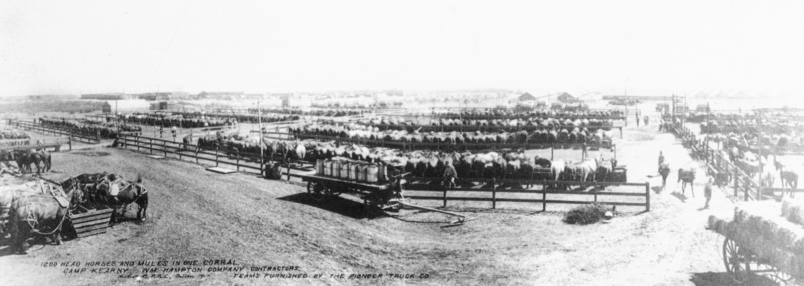 An overview of 1200 head of horses and mules in one corral at Camp Kearny, California (CA). The teams furnished by the Pioneer Trucking Company. Note: In the future this area became the US Navy (USN) Naval Air Station Miramar