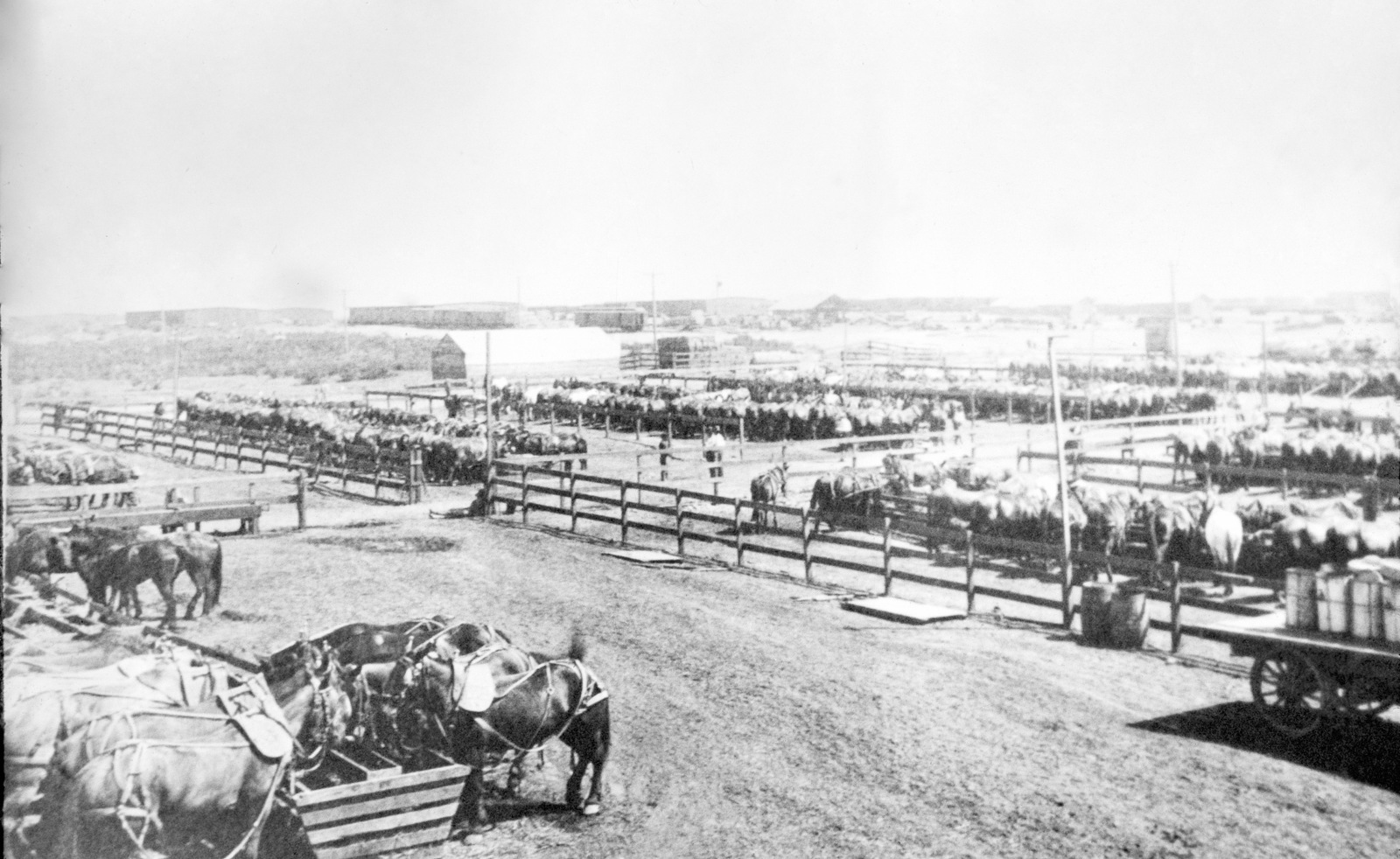 An overview of some of the 1200 horses and mules corralled at Camp Kearny, California (CA). The teams furnished by the Pioneer Trucking Company. Note: In the future this area became the US Navy (USN) Naval Air Station Miramar. (Exact Date Shot Unknown)