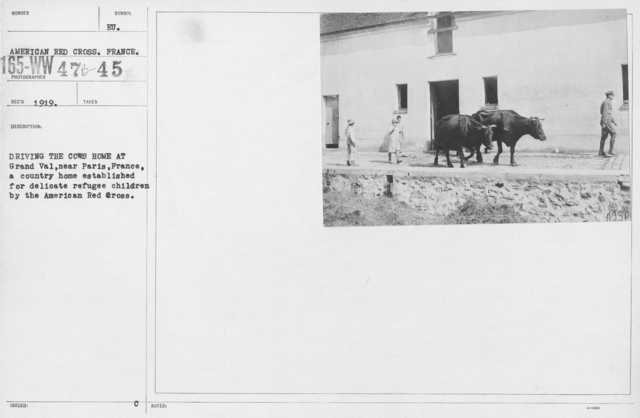 American Red Cross - Refugees - Driving the cows home at Grand Val, near Paris, France, a country home established for delicate refugee children by the American Red Cross