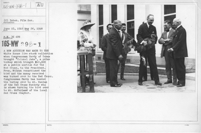 """American Red Cross - Soliciting Funds - Miscellaneous - A new addition was made to the White House live stock collection when Congressman Hardy of Texas brought """"Colonel Jake"""", a prize turkey which brought $10,000 at a public auction for the Red Cross, to the President. Pres. Wilson reauctioned the bird and the money received was turned over to the Red Cross. Congressman Hardy has handed the turkey over to Mr. Hanlan of the Red Cross Society who is shown turning the bird over to Mr. McFarland of the local Red Cross Chapter"""