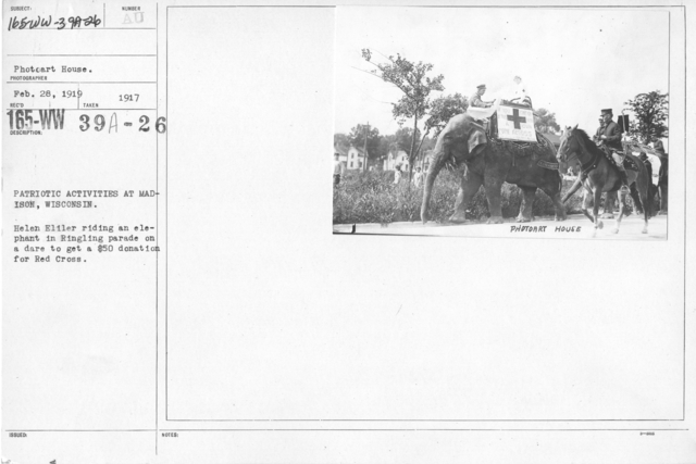 American Red Cross - Soliciting Funds - Public Gatherings - Patriotic activities at Madison, Wisonsin. Helen Eliler riding an elephant in Ringling parade on a dare to a a $50 donation for Red Cross