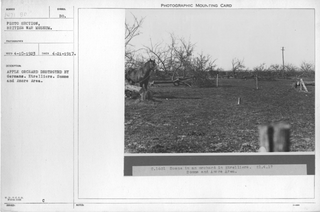Apple orchard destroyed by Germans. Etrelliers. Somme and Ancre Area