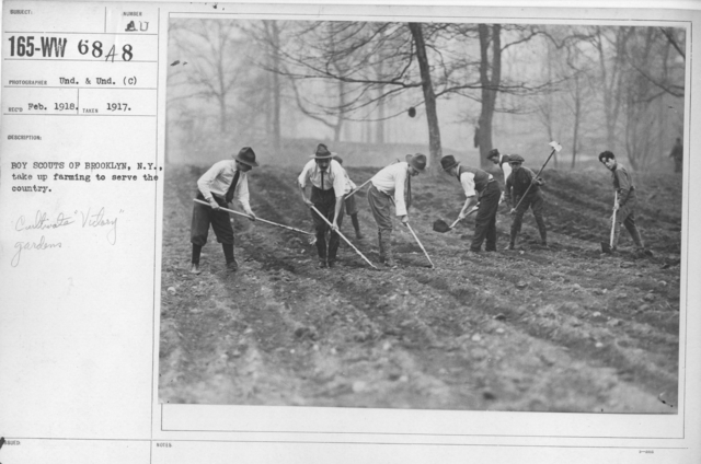 Boy's Activities - Agriculture - Boy Scouts of Brooklyn, N.Y., take up farming to serve the country