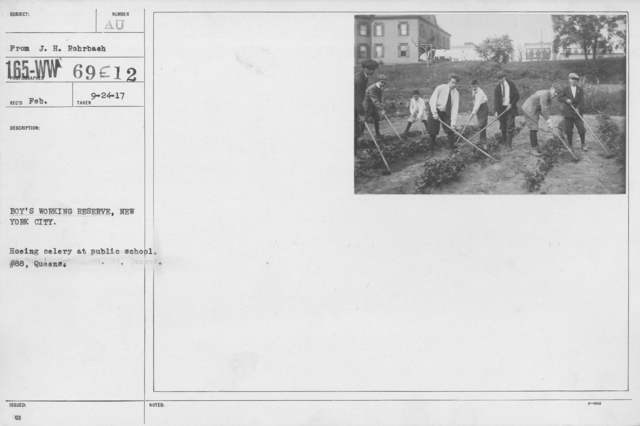 Boy's Activities - U.S. Working Boy's Reserve - Boys' Working Reserve, new York City. Hoeing celery at public school. #88, Queens