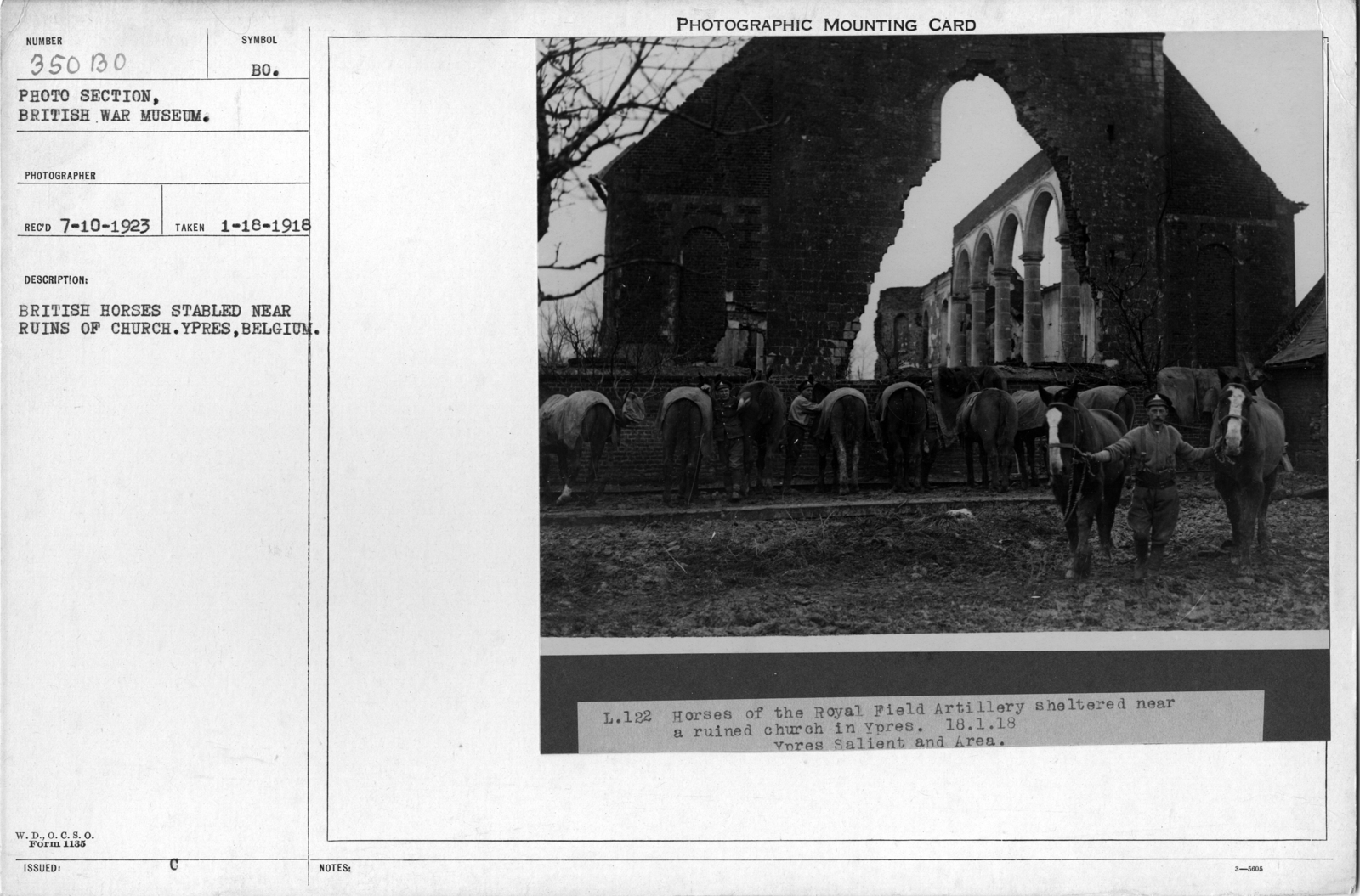 British horses stabled near ruins of church. Ypres, Belgium; 1/18/1918