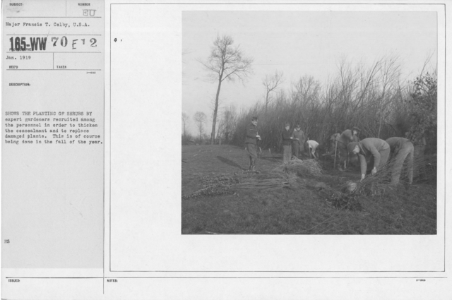 Camouflage - Roads - Shows the planting of shurbs by expert gardeners recruited among the personnel in order to thicken the concealment and to replace damaged plants. This is of course being done in the fall of the year