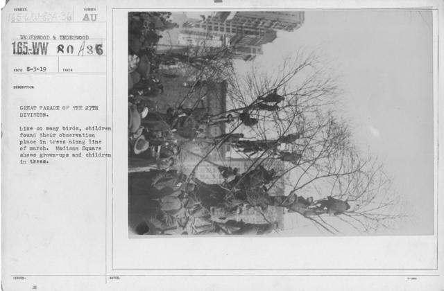 Ceremonies - Demobilization - Great Parade of the 27th Division. Like so many birds, children found their observation place in trees along line of march. Madison Square shows grown-ups and children in trees