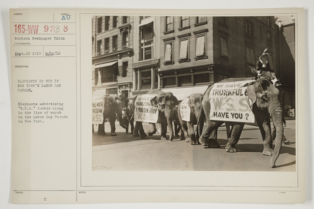 "Ceremonies - Salutes and Parades - New York - Elephants do bit in New York's Labor Day Parade.  Elephants advertising ""W.S.S."" lumber along in the line of march in the Labor Day Parade in New York"