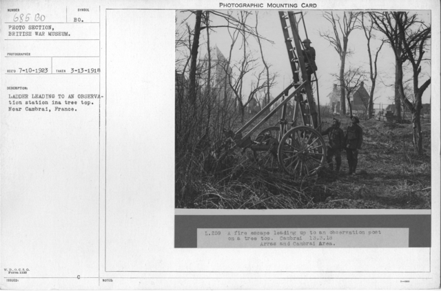 Ladder leading to an observation station in a tree top. Near Cambrai, France. 3-13-1918