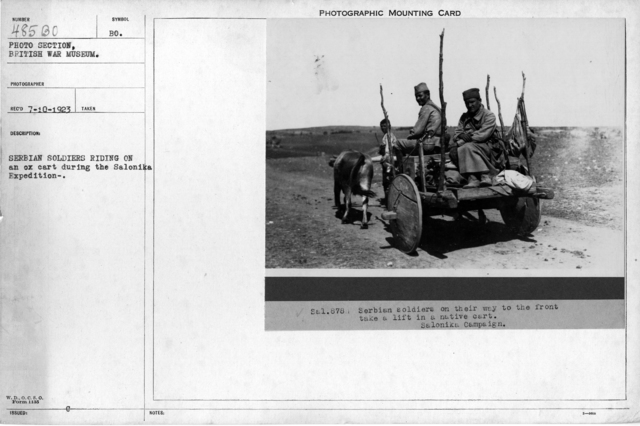Serbian soldiers riding on an ox cart during the Salonika Expedition