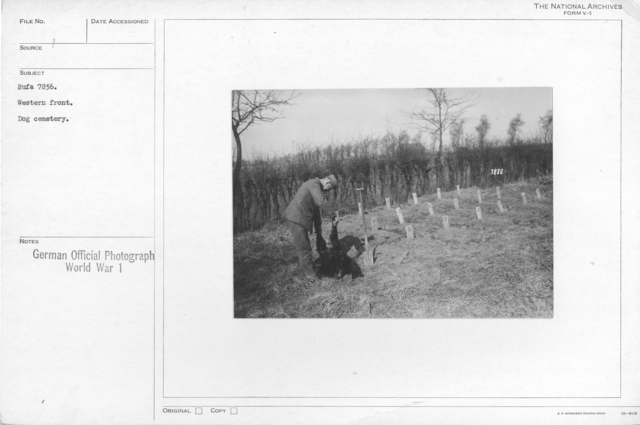 Western front. Dog cemetery