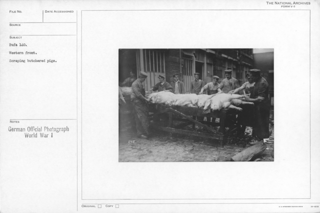 Western front. Scraping butchered pigs