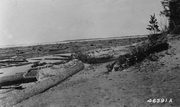 Photograph of Boom Containing 80,000 Logs