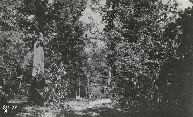 Photograph of the Site of Robert E. Lee's Last Headquarters in the Field