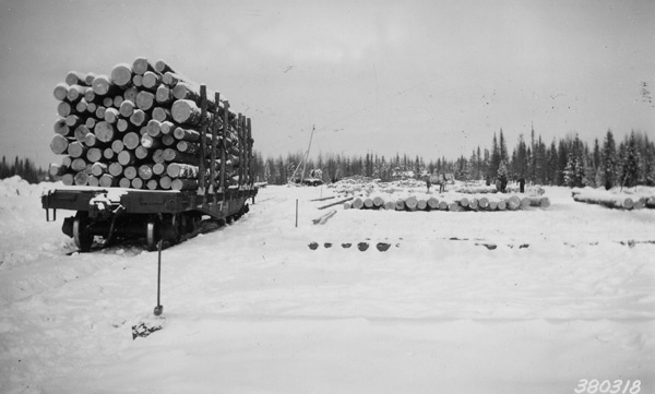 Photograph of Timber Ready for the Sawmill
