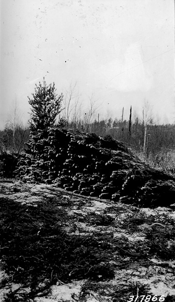 Photograph of Trees Piled for Hauling