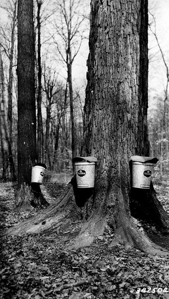 Photograph of Modern Equipment for Maple Sap Production