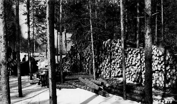 Photograph of Timber Sales