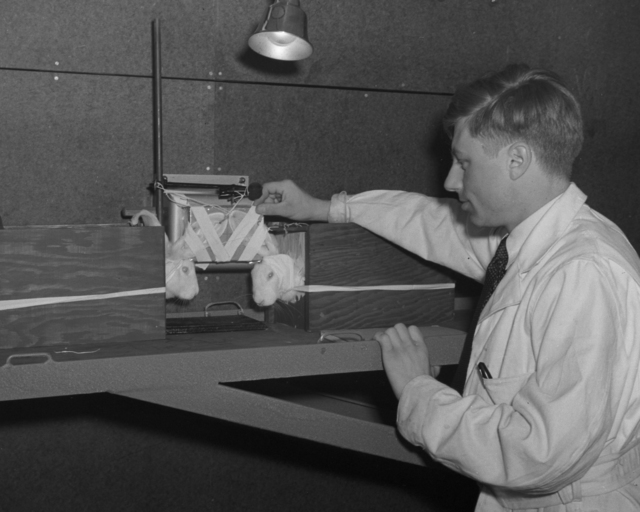 Dr. Pecher with rabbits in treatment room of 60-inch cyclotron, taken March 20, 1940. Principal Investigator/Project: Analog Conversion Project [Photographer: Donald Cooksey]