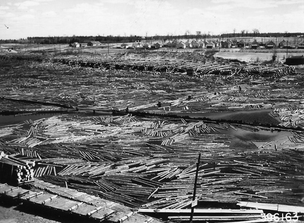 Photograph of Logs in Flambeau River