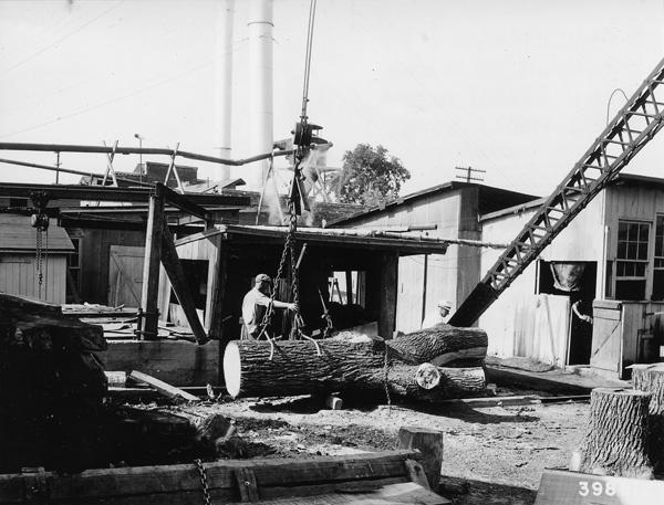 Photograph of Walnut Veneer Log Being Cut