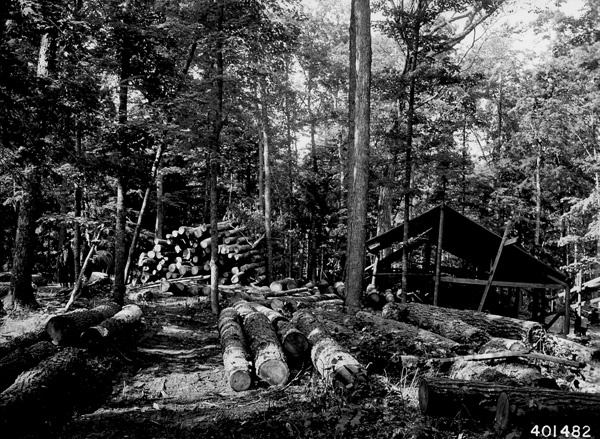 Photograph of Portable Sawmill Set up in the Woods