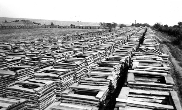 Photograph of Barrel Staves Stacked for Drying
