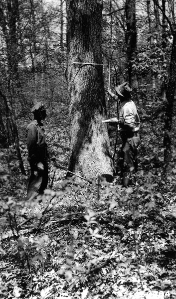 Photograph of Timber Owner Willard Sipp and  Mosaic Company Buyer W. H. Arnold Marking Veneer White Oak