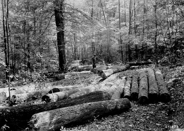 Photograph of Products of Selective Cutting in Mixed Hardwood Stands on the Flagg Estate in Southern Ohio