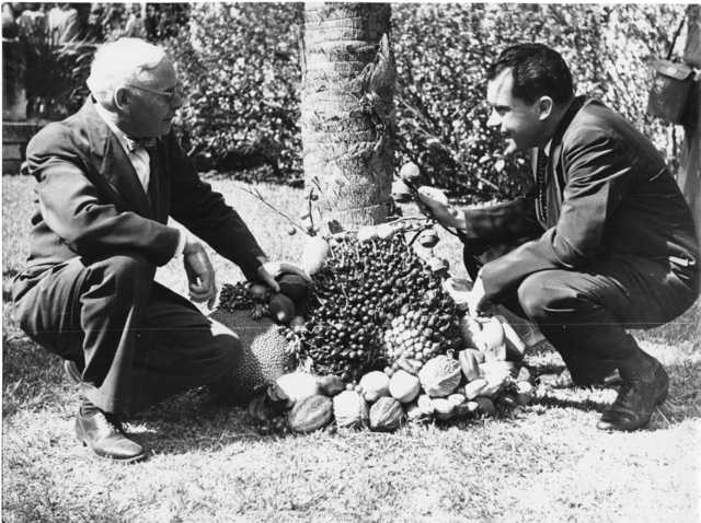 Vice President Richard Nixon and horticulturalist Wilson Popenoe examine a grouping of tropical fruits, including palm fruits, cacao pods, and jackfruit in Guatemala