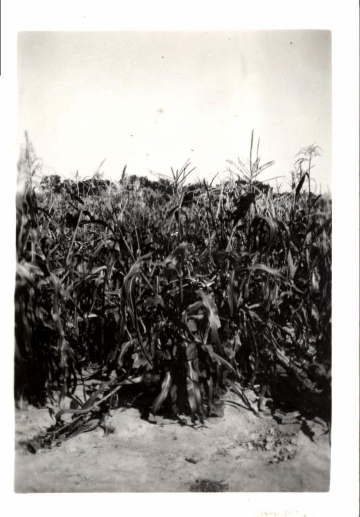 Farming (Crops)