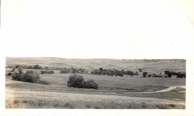 Landscape (Bear Creek - Spring Creek Site)