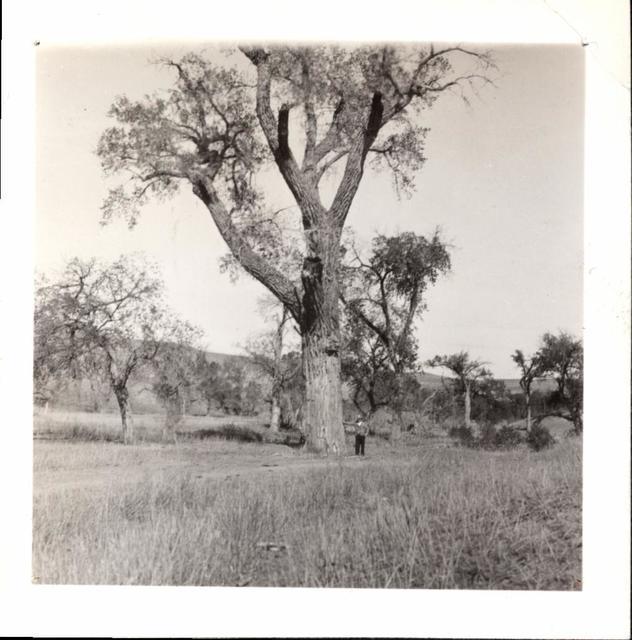 Landscape (Man and Huge Tree)