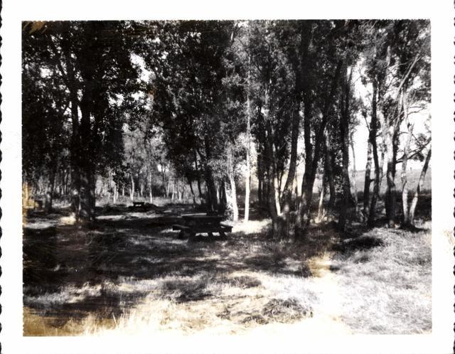 Landscape (Woods)