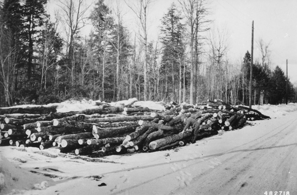 Photograph of Smelting Poles at the White Pine Mine