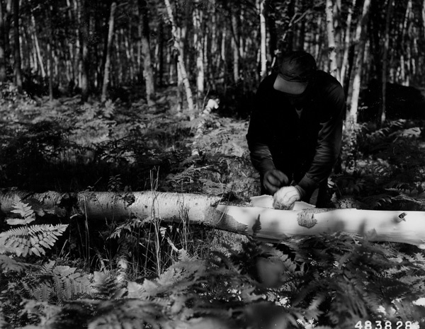 Photograph of Peeling Aspen Pulp Logs