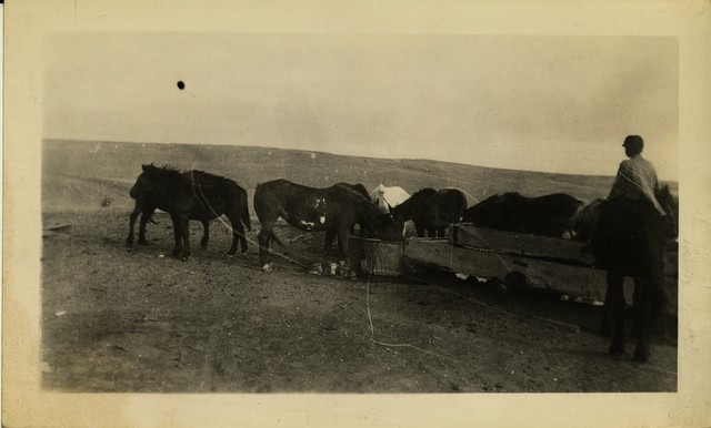 Arnold Scath's Horses at Water Tank