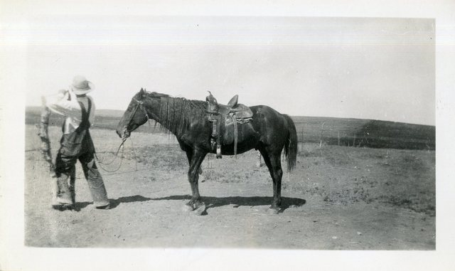 Bob Whipple and Horse He Traded a Worn Out Plug Because the White Man Could Not Ride This Young Four Year Old Morgan