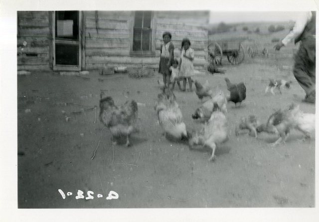 Chickens with House and Three Children