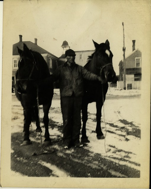 Man Holding Team of Horses, Brick Buildings in Background