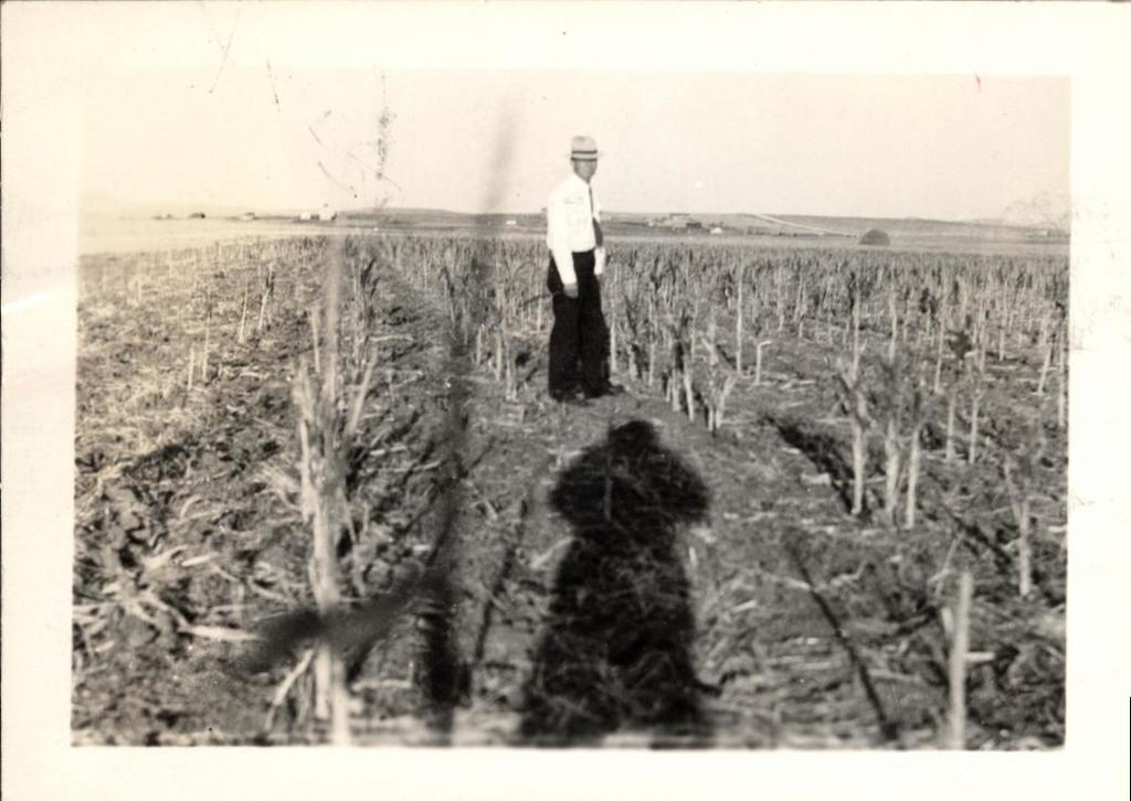 Man Standing in Cornfield