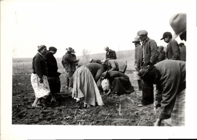 Men and Women Planting