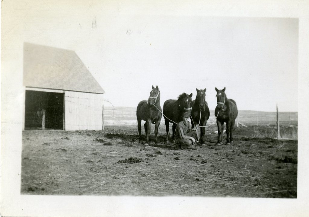 Percy Cock's Horses, Three Mares and One Gelding