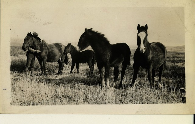Robert Jackson's Rehabilitation Mares and Their Colts