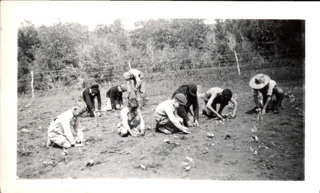 Rosebud 4-H Boys Transplanting Cabbage in Irrigate Community Garden