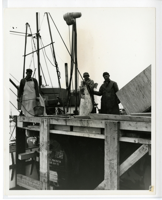 6/65. Homer - Two young fishermen show a medium sized halibut at new cannery built on small boat harbor