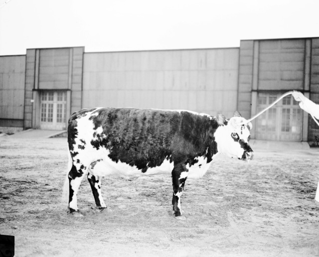 [Agricultural Show - Versailles]