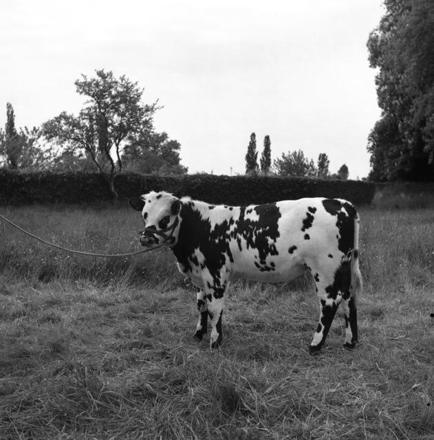 [Modern Milk Plant (Cooperative Laitiere du Mans)]
